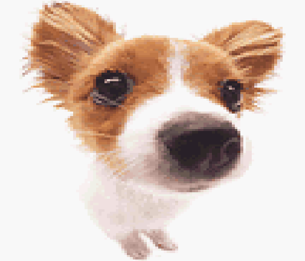 Pocket Dogs Ubisoft Game Boy Advance Xtreme Retro 2
